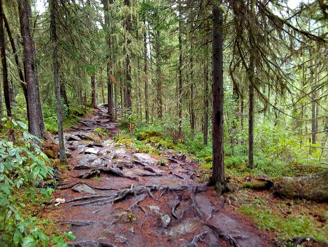 The trail in the forest was endless mud, rocks, and tree roots which were very slippery. by bryandkeith on flickr