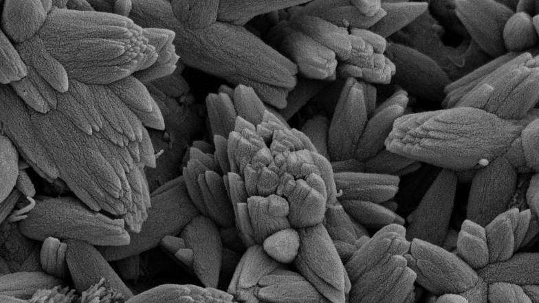 Conerete under a microscope