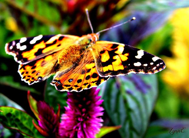 Butterflies all over