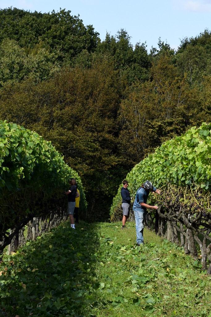 Local Workers at Biddenden Vineyard