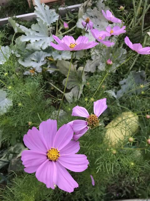 Le jardin en septembre