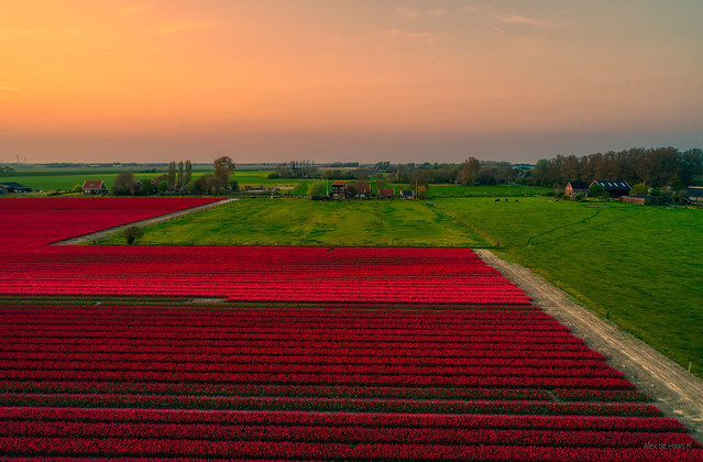 Holland's giving you all a red carpet welcome.