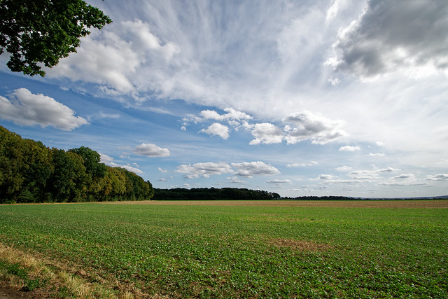 Blick übers Feld