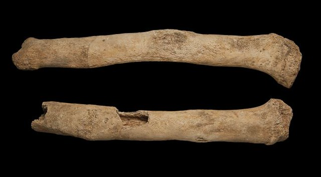 Two bones showing extensive lamellar and woven new bone formation