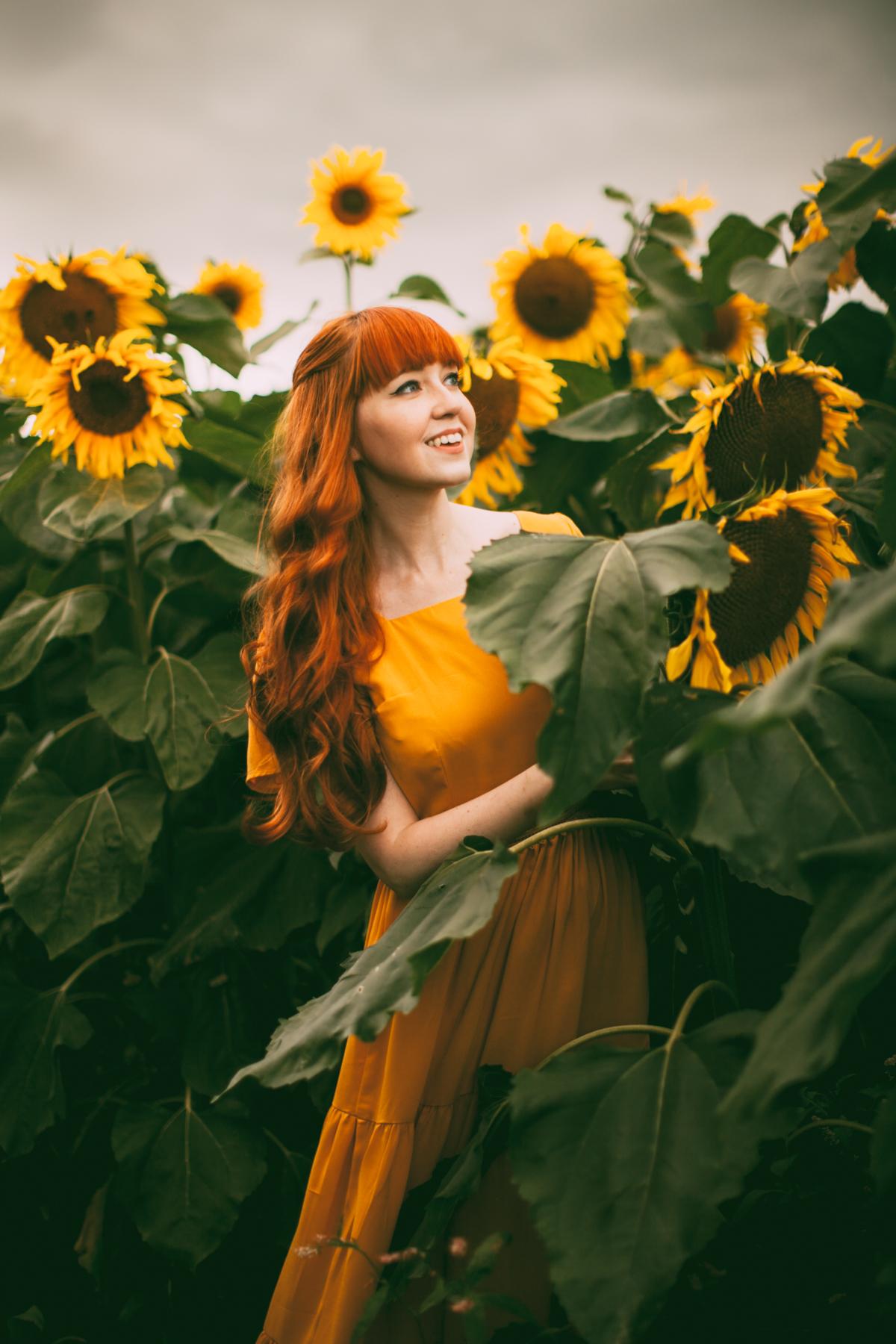 sunflower-60