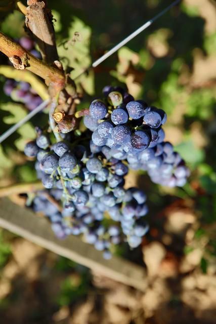 Inauguration du 1er domaine viticole professionnel d'Ile-de-France à Davron