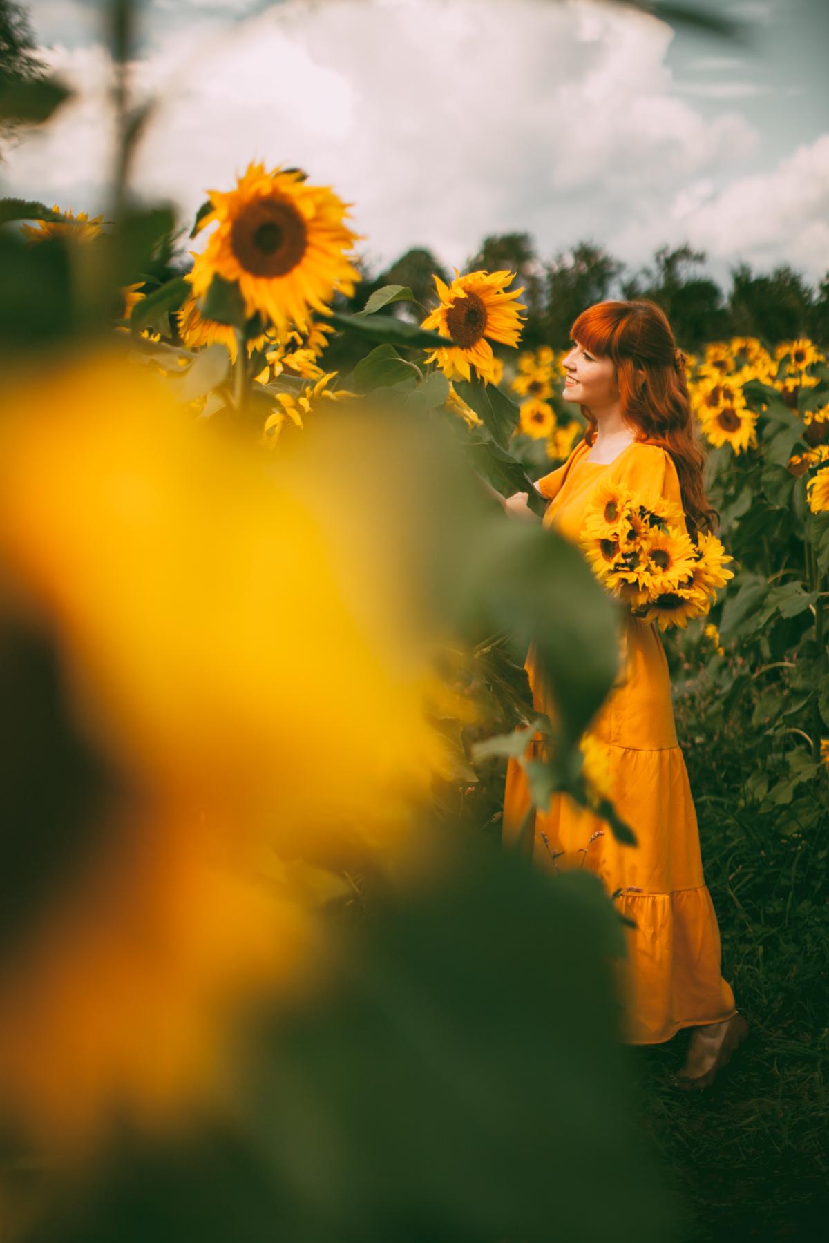 sunflower-39