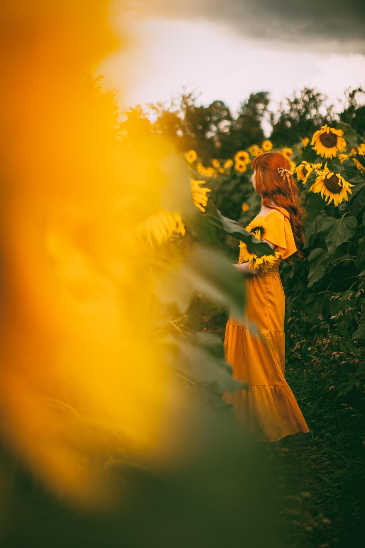 sunflower-52