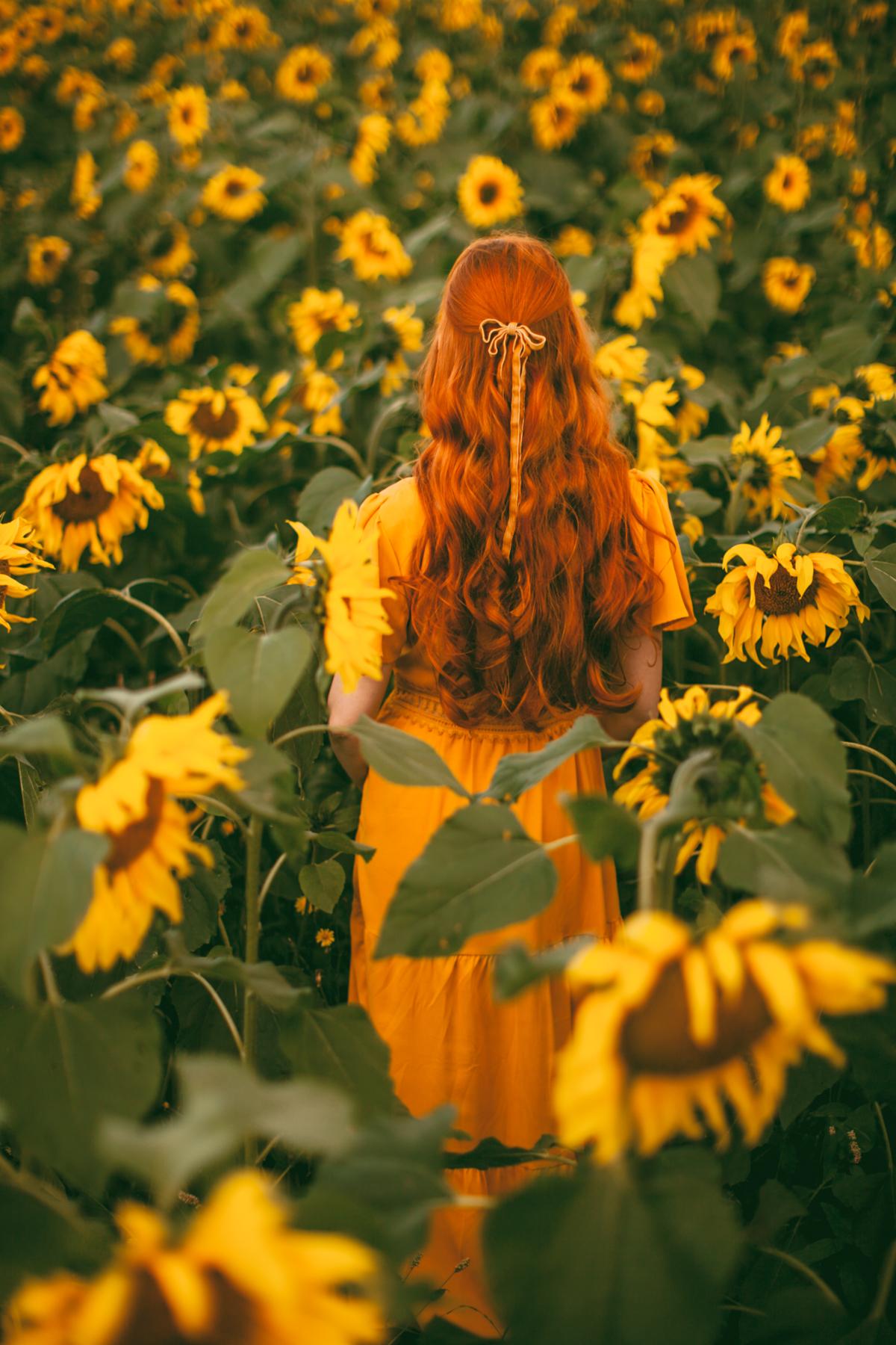 sunflower-30