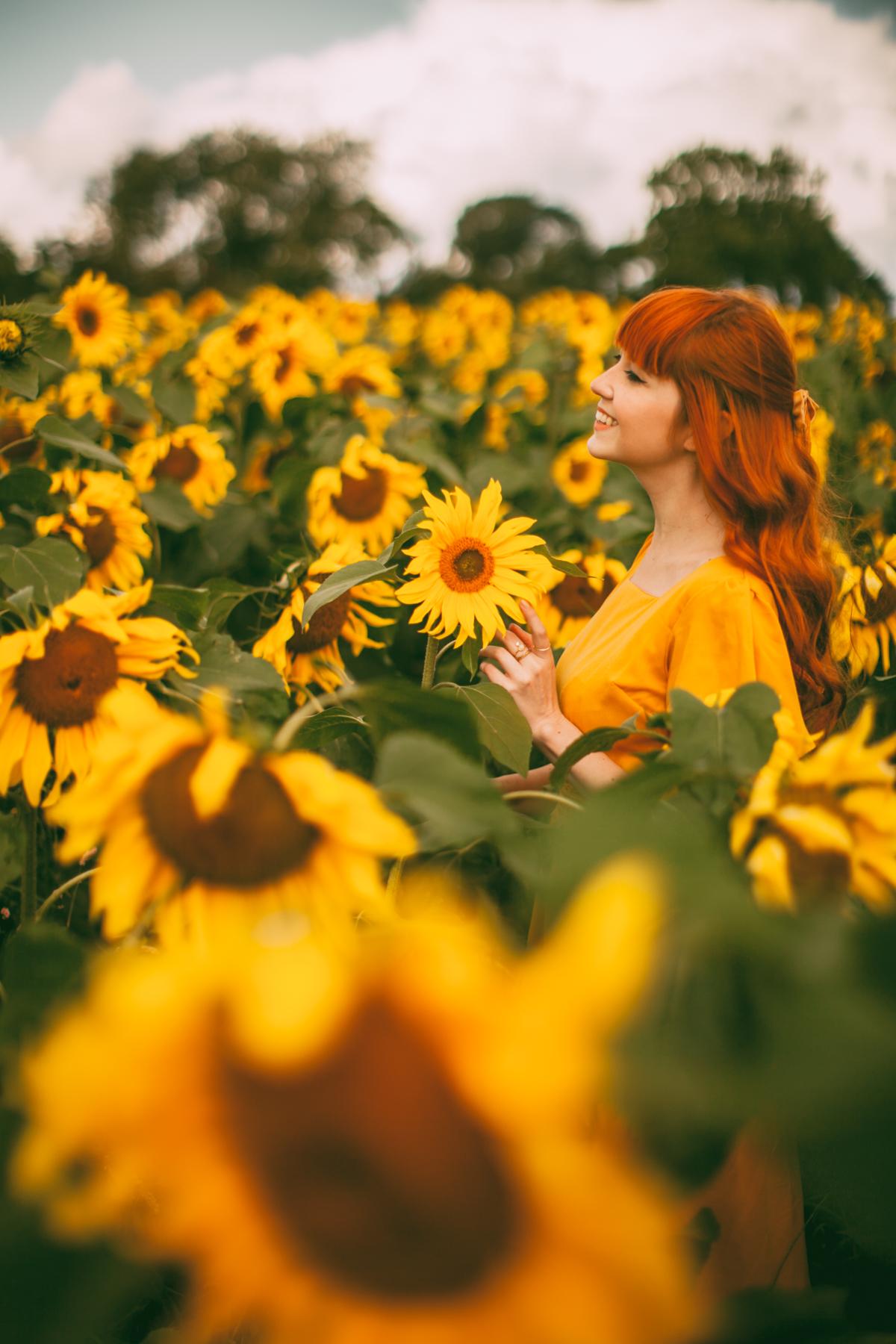 sunflower-26