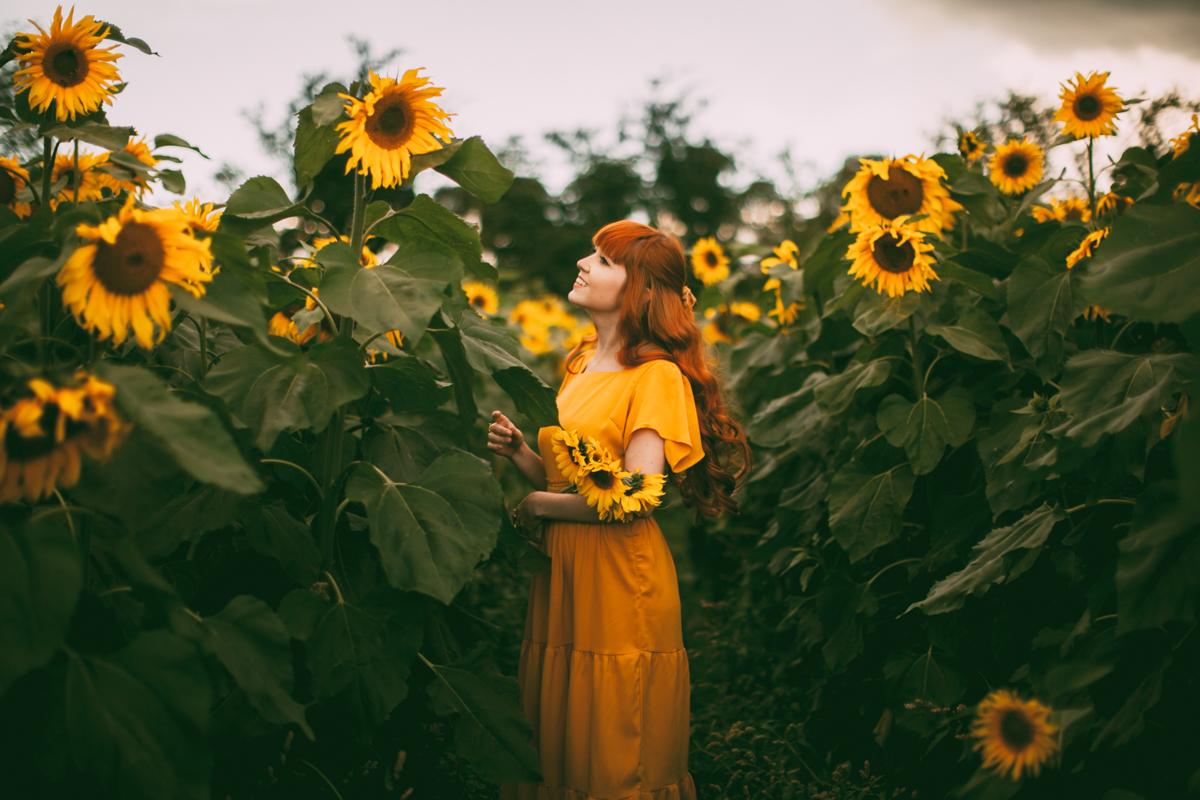 sunflower-59