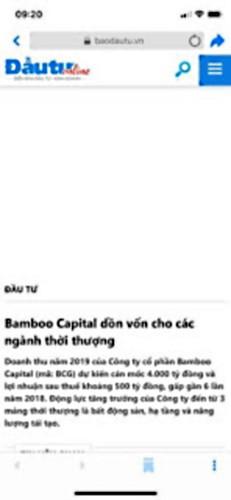 bamboo_capital01