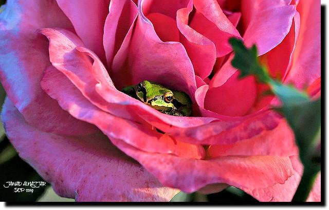 STRANGER INSIDE MY FLOWER------IN EXPLORE