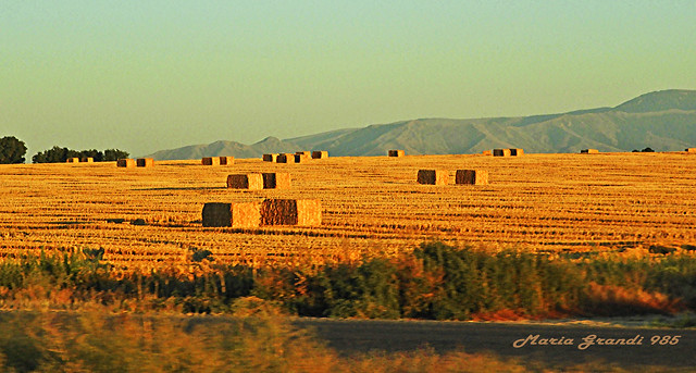Rural Oregon Landscape through  the window glass of the car-N7