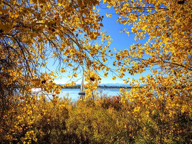 Golden Autumn 🍂