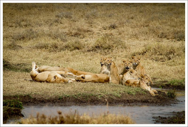 Ngorongoro-112