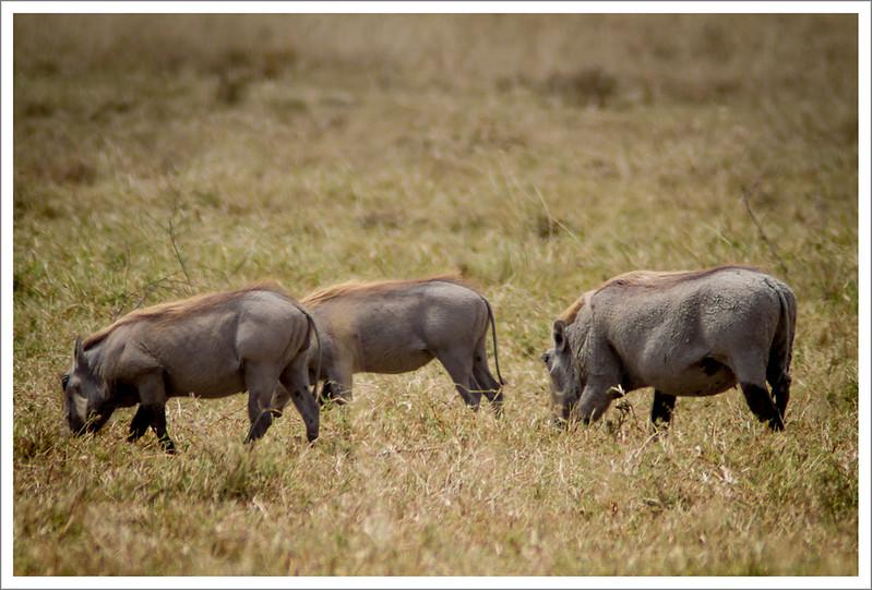 Ngorongoro-78