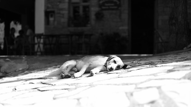 Dog days are over...
