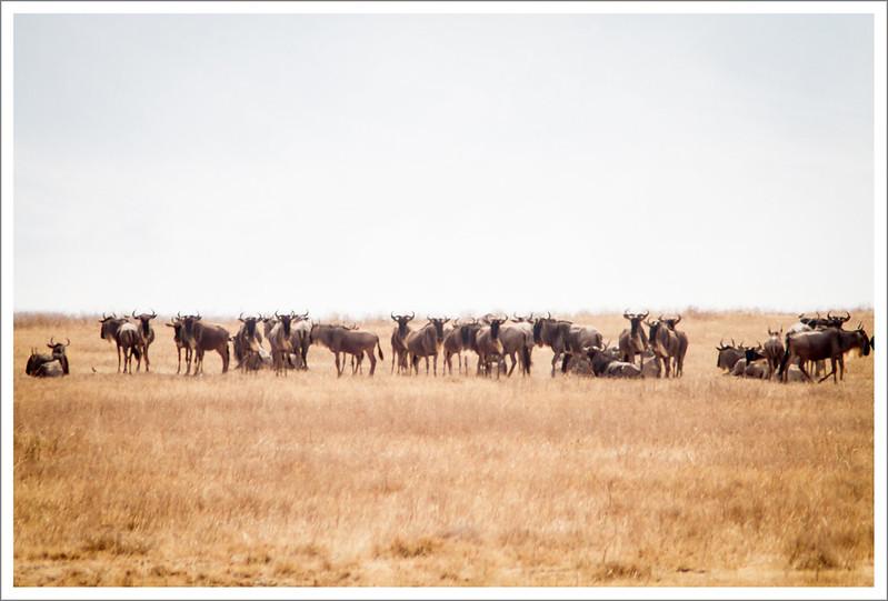 Ngorongoro-99