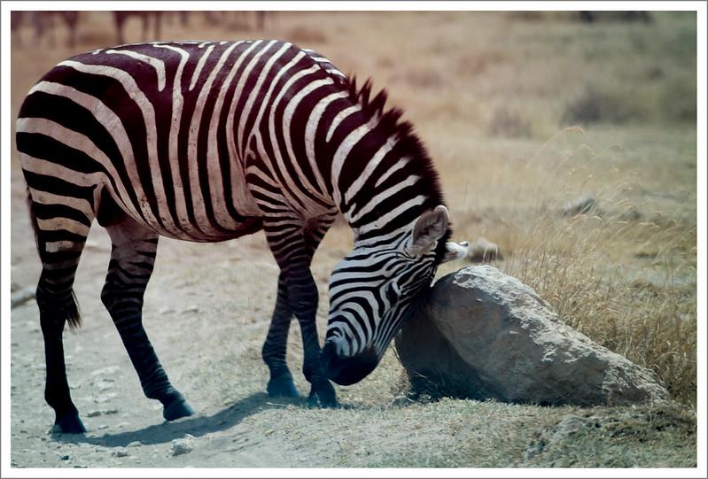 Ngorongoro-80