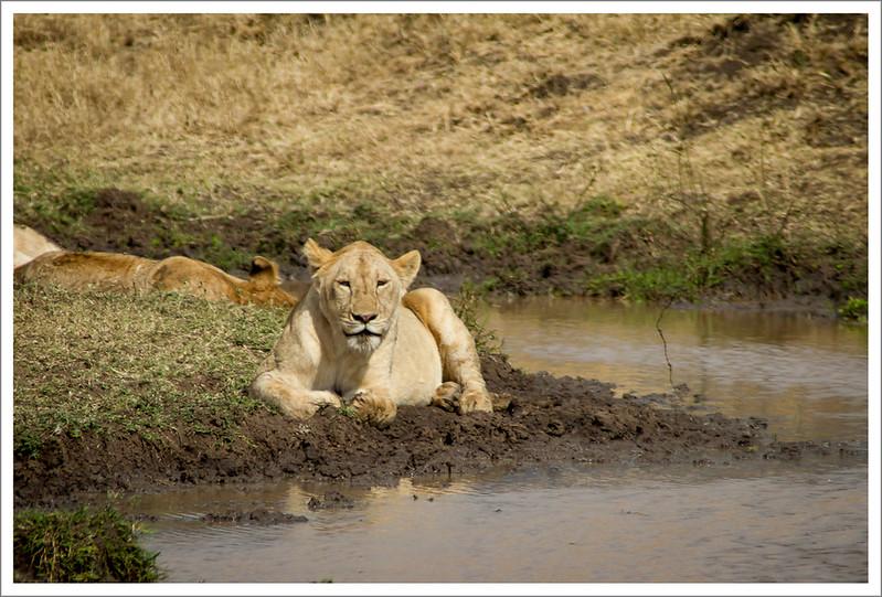 Ngorongoro-105