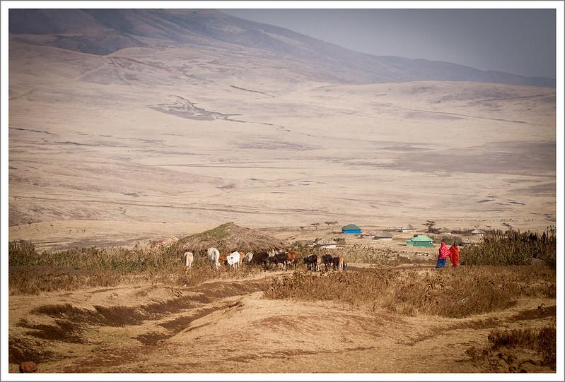 Ngorongoro-6