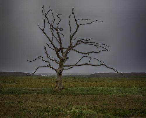 tree deadtree marshes exmoor bossington porlock saltmarshes salineincursion somerset uk england muted layered flora silouette
