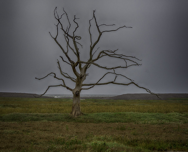 Ghost of a Tree: UK, Exmoor, Porlock Marshes
