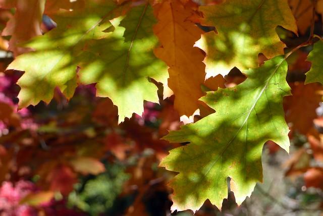 Under the Autumn canopy