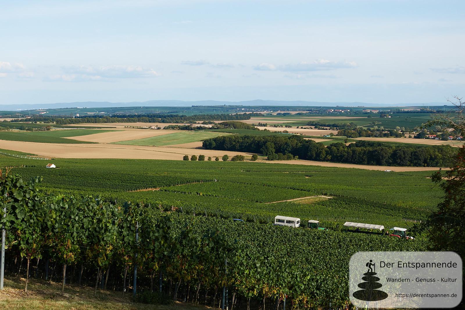 Blick auf Weinberge und Selztal bis zum Odenwald