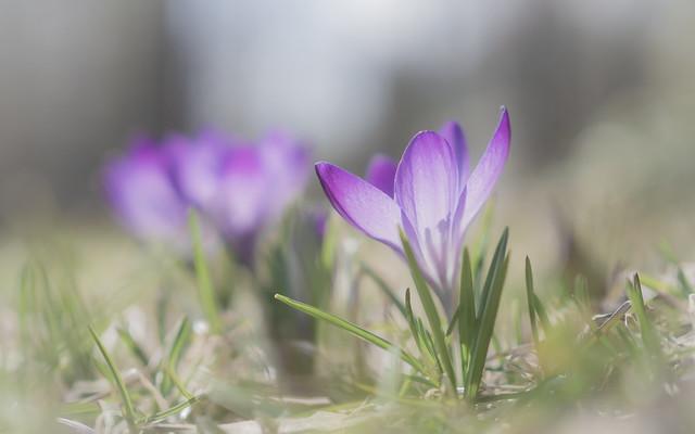 spring in pastel