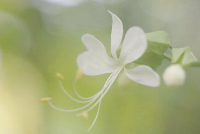 Fleur parfum Pastel