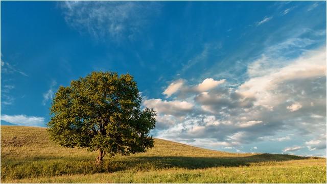 Ein Baum und sein Schatten