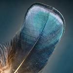 Feather / macro