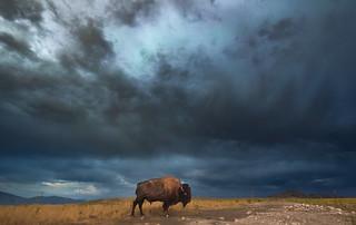 Antelope Storm1 (1 of 1)