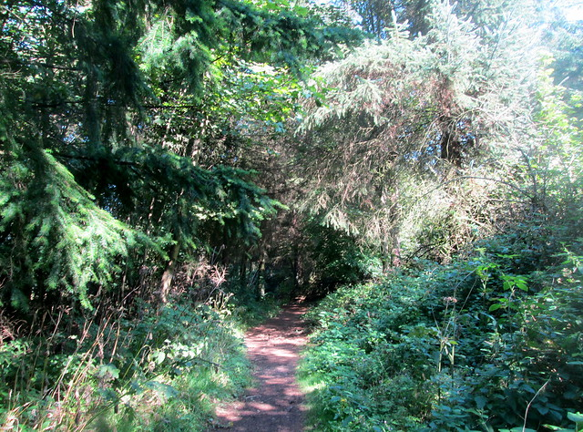 Balbirnie woodland, Markinch, Fife