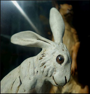 rabbit with a sickly smile