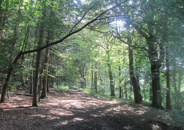 Balbirnie path