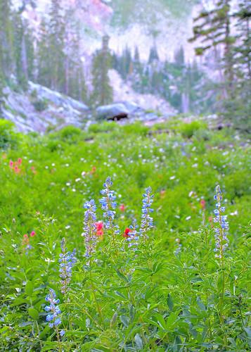eechillington nikond7500 viewnxi corelpaintshoppro bigcottonwoodcanyon brightonlakestrail utah nature hiking flower landscape