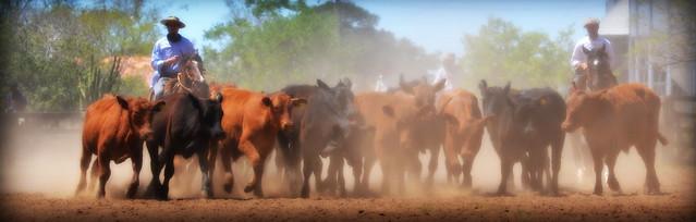 Repontando o gado