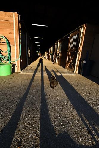 longshadowslongshadowlongshadowcatshorsesstablessunseteveningpetsfarmdoorwayalley