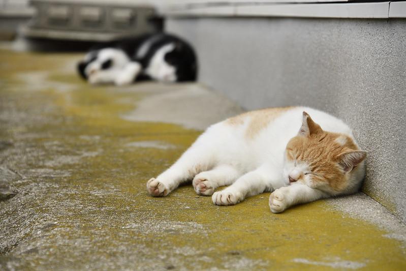 AOSHIMA CAT Island