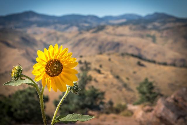Wild Flower - Colorado Springs (4402)