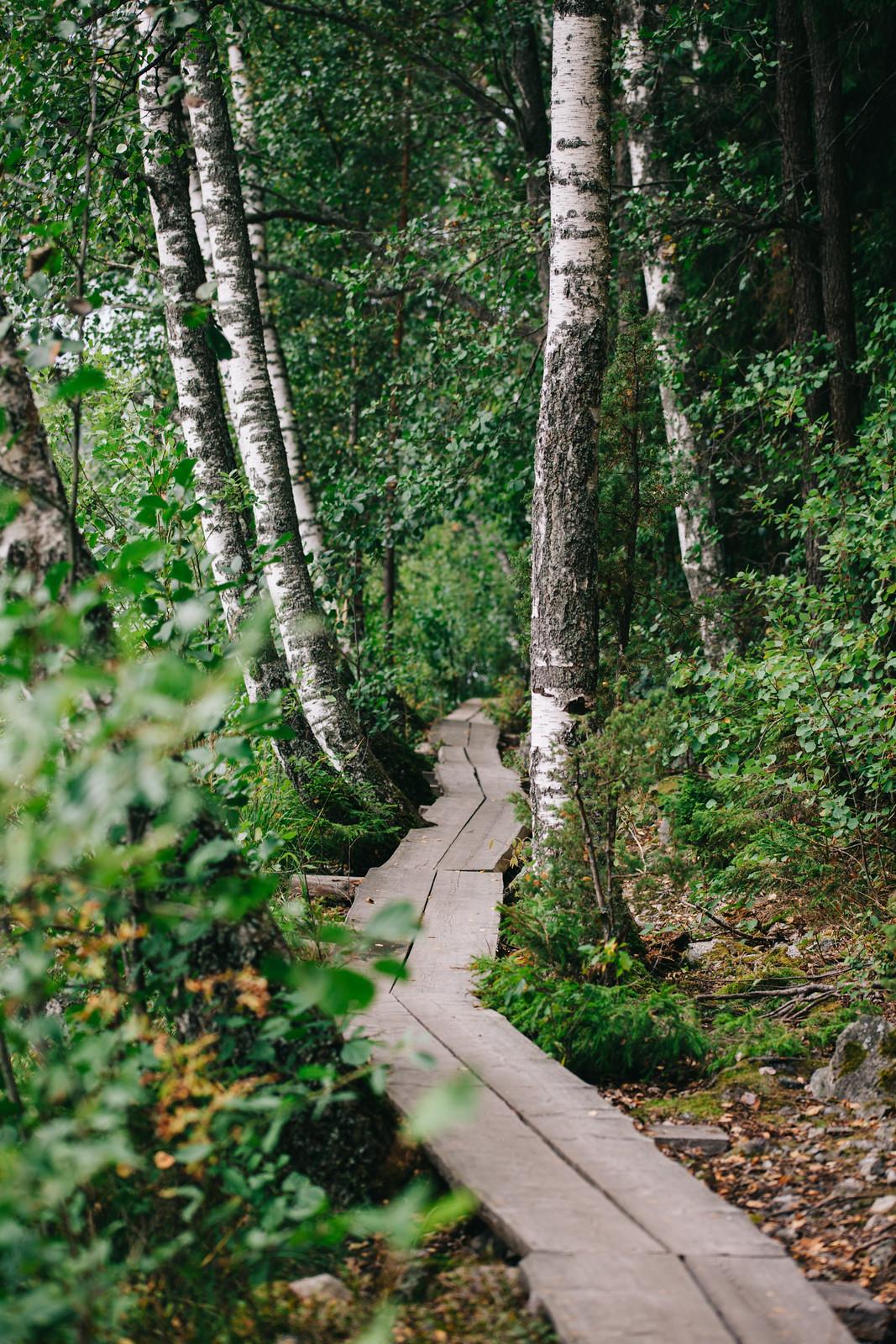 Aulangonjärven kierros Sibeliuksen metsä