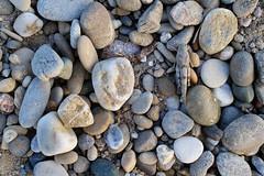 Sphingonotus caerulans - Blauflüglige Sandschrecke