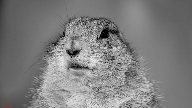 Animal Portrait - 7368