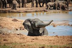 One Happy Elephant