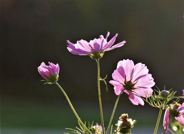 Flowers 24 AUG