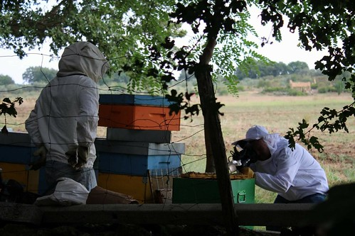 Shooting Honeybees on their Comb