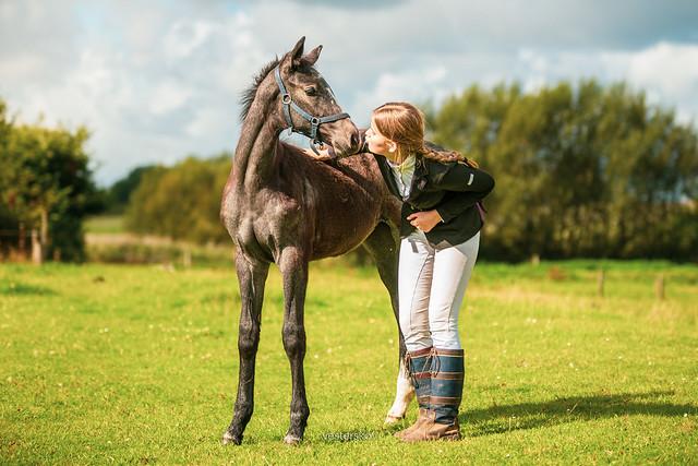 Lykkesborgs Verona Warmblood Foal